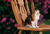 CAT 03 RK2390 07