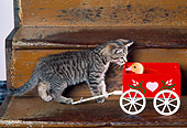 CAT 03 RK2426 07