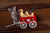CAT 03 RK2426 08