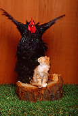 CAT 03 RK2497 05