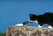 CAT 03 RK2507 05