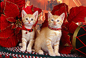 CAT 03 RK2521 02