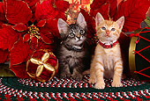 CAT 03 RK2522 02