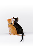 CAT 03 RK2528 03