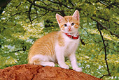 CAT 03 RK2554 03