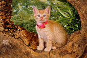 CAT 03 RK2556 02