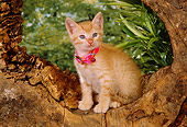 CAT 03 RK2556 03