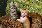 CAT 03 RK2559 02