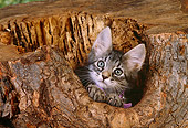 CAT 03 RK2563 01