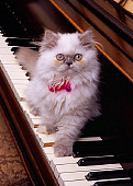 CAT 03 RK2568 21