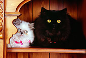 CAT 03 RK2572 05