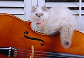 CAT 03 RK2573 06