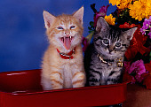 CAT 03 RK2588 10