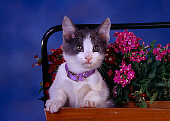 CAT 03 RK2592 02