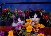 CAT 03 RK2593 08