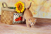 CAT 03 RK2603 01