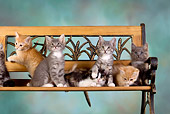 CAT 03 RK2626 01
