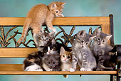 CAT 03 RK2629 01