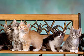 CAT 03 RK2632 01