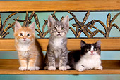 CAT 03 RK2633 01