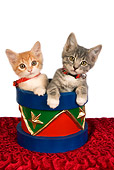 CAT 03 RK2643 01