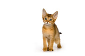 CAT 03 RK2649 01