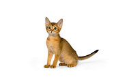 CAT 03 RK2650 01