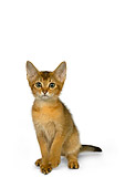 CAT 03 RK2653 01