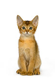 CAT 03 RK2654 01