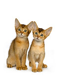 CAT 03 RK2657 01