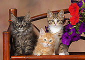 CAT 03 RK2660 01