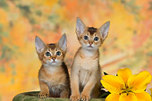 CAT 03 RK2662 01