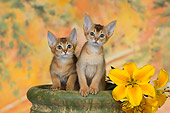 CAT 03 RK2663 01