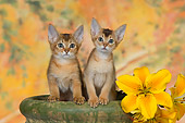 CAT 03 RK2664 01