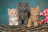 CAT 03 RK2665 01