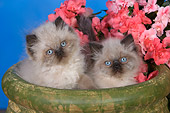 CAT 03 RK2670 01
