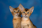 CAT 03 RK2674 01