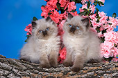 CAT 03 RK2678 01