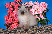 CAT 03 RK2679 01
