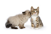 CAT 03 RK2682 01