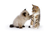 CAT 03 RK2683 01