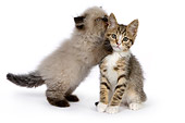 CAT 03 RK2684 01