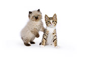 CAT 03 RK2685 01