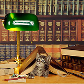 CAT 03 RS0046 02