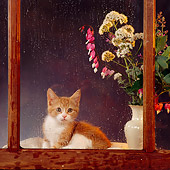 CAT 03 RS0051 01
