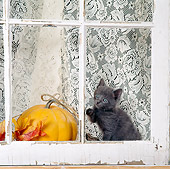 CAT 03 RS0075 01