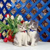 CAT 03 RS0079 01