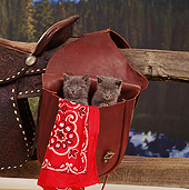 CAT 03 RS0082 01