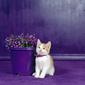 CAT 03 RS0089 01
