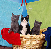CAT 03 RS0115 01